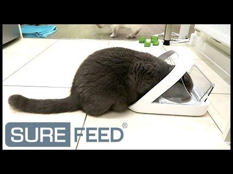 surefeed microchip pet feeder manual
