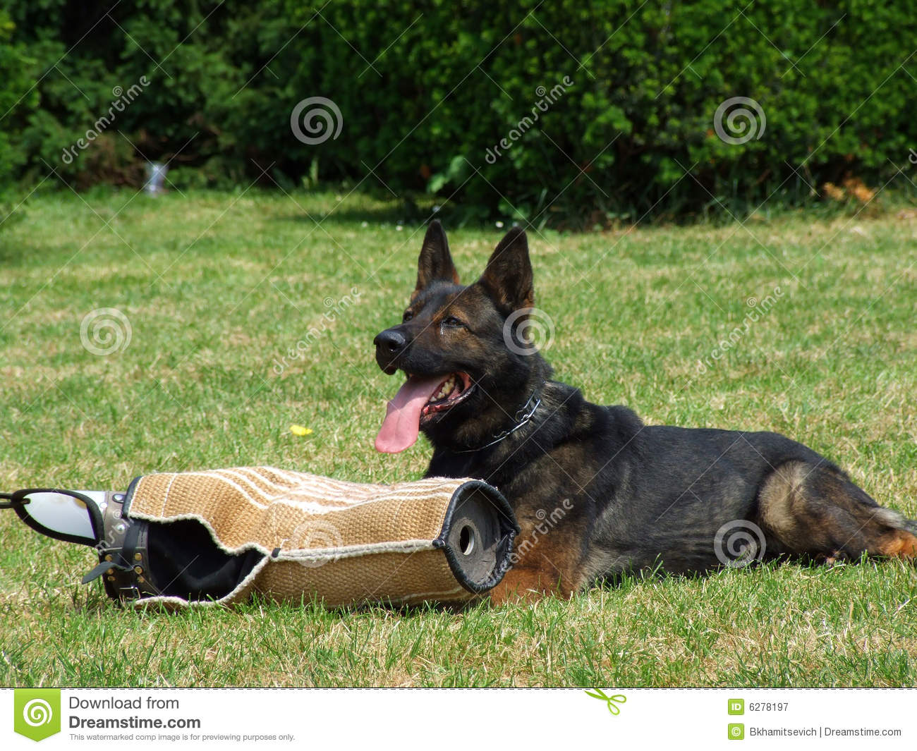 guard dog training manual pdf