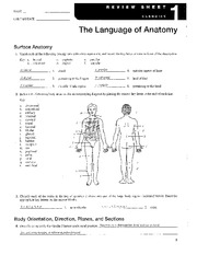 essentials of human anatomy and physiology laboratory manual answers